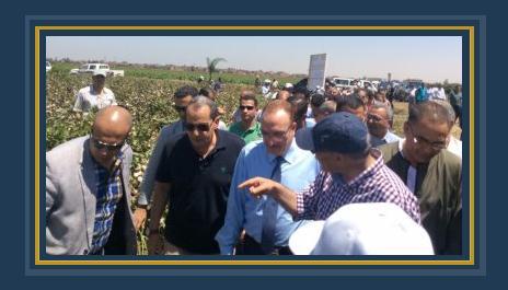 عصام فايد وزير الزراعة - موسم جنى قطن الإكثار بمحطة سدس ببنى سويف