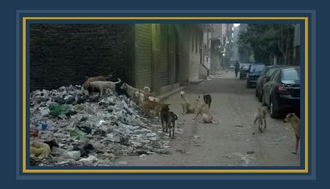أعداد كبيرة من الكلاب الضالة بمنطقة أرض اللواء