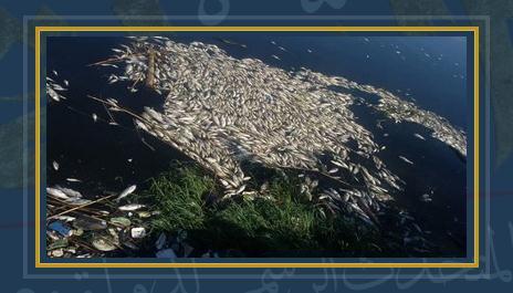 نفوق أسماك - أرشيفية