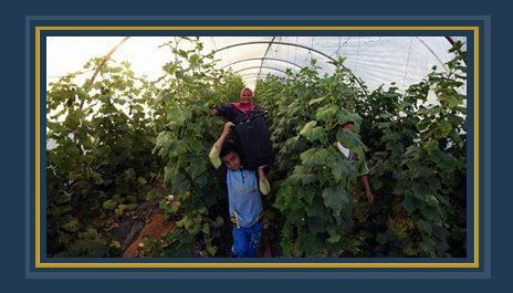 الصوب الزراعية - صورة أرشيفية