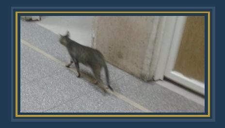القطط داخل المستشفى الميرى