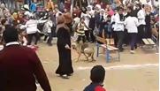 كلب ف مدرسة بالغربية